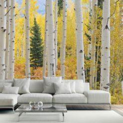 MU1433 - Aspen Forest Elk Mountains, Colorado